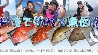 釣り魚図鑑