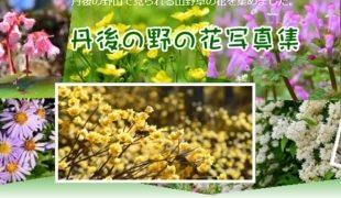 野の花写真集