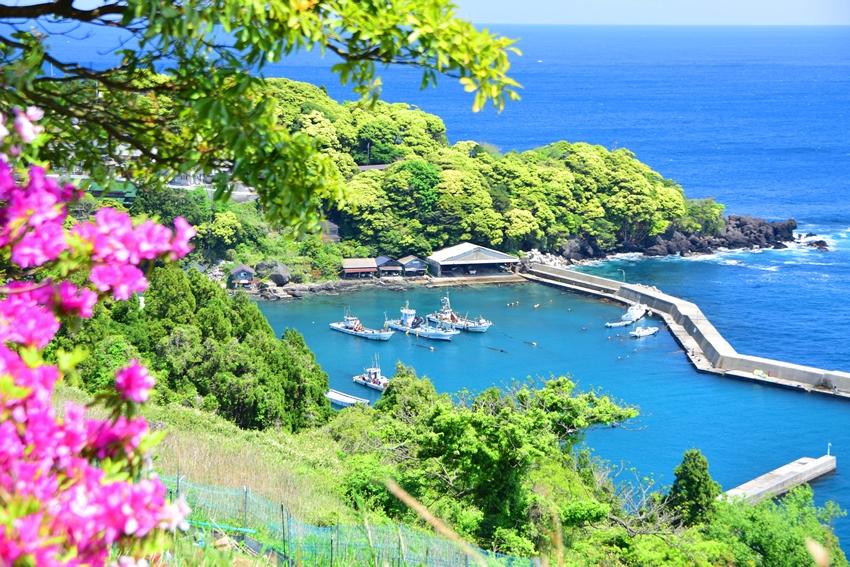 新緑の新井漁港